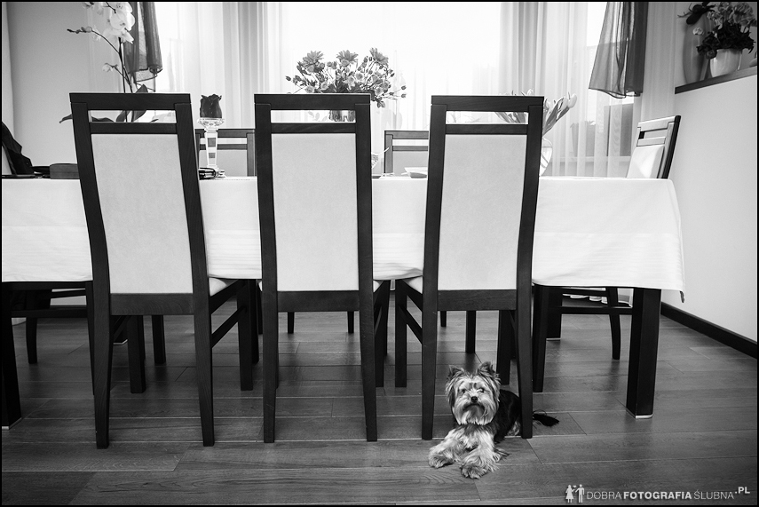 Przygotowania ślubne - pies pod stołem