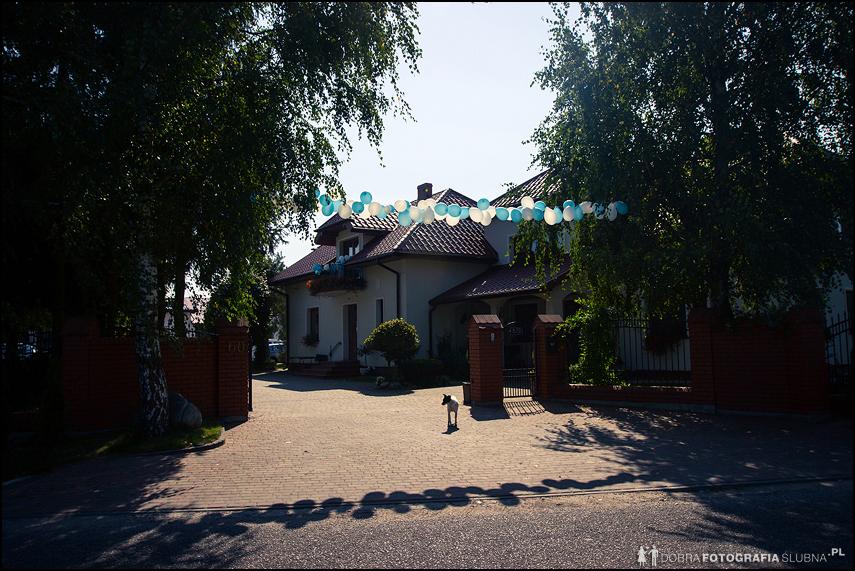 Brama ślubna przed domem panny młodej, zrobiona z balonów. Wejścia pilnuje pies