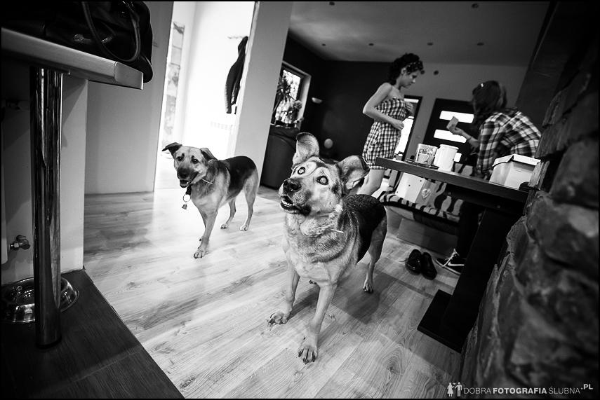 psy w domu